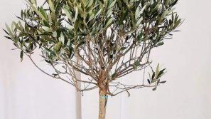 Ogród oliwny i nabożeństwo Getsemani w sanktuarium Jana Pawła II